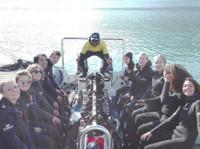 Snorkel With Seals (6) - Travel Agencies