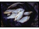 Ebro Angling Tours (1) - Fishing & Angling