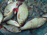 Ebro Angling Tours (2) - Fishing & Angling