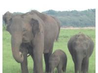 www.ferien.lk Sri Lanka günstig buchen 2017 (1) - Reiseseiten