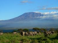 Kilimanjaro safari holidays dmc (1) - Travel Agencies