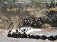 Kilimanjaro safari holidays dmc (7) - Travel Agencies