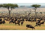 Smart Travel African safaris Ltd (1) - Walking, Hiking & Climbing