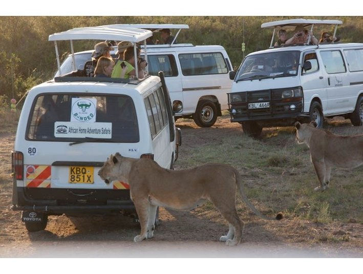 African Home Adventure Safaris - Agencias de viajes