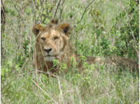 African Home Adventure Safaris (2) - Agences de Voyage