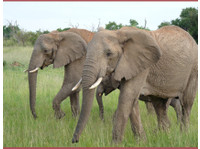 African Home Adventure Safaris (3) - Agences de Voyage