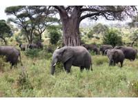 Classic Tours and Safaris Co.Ltd (5) - Agences de Voyage