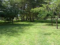 Arusha Real Estate & Homes Ltd (8) - Rental Agents