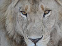 Donak Safaris Ltd (4) - Travel Agencies