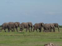 Donak Safaris Ltd (8) - Travel Agencies