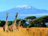 Kilimanjaro Tanzanite safaris Ltd (1) - Agences de Voyage