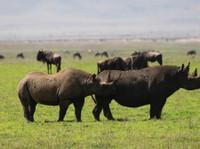 Kilimanjaro Tanzanite safaris Ltd (3) - Agences de Voyage