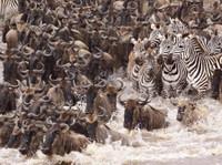 Kilimanjaro Tanzanite safaris Ltd (7) - Agences de Voyage