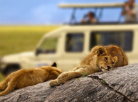 Alaitol Safari (1) - Travel Agencies