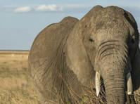 Uphill Treks and Safaris (2) - Travel Agencies