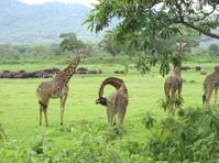 Uphill Treks and Safaris (3) - Travel Agencies