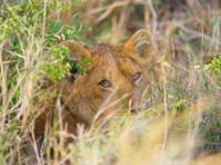 Bujo Tours and Safaris Ltd (5) - Travel Agencies