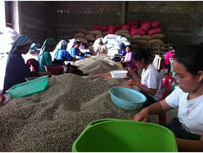 Coffee Bean Exporter Bangkok Thailand- Cabana Coffee - Import/Export
