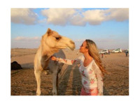 Abu Dhabi Evening Safari, Cheap Desert Safari Packages (2) - Travel sites