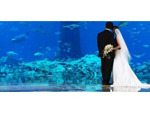 Plan Dubai Wedding - Conference & Event Organisers
