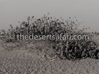 Desert Safari Dubai (2) - Travel Agencies
