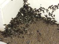 Kent Pest Management (1) - Builders, Artisans & Trades