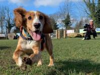 Snack Leader Dog Training (3) - Pet services