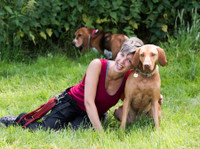 Pack Buddies Doggy Daycare Southampton (2) - Pet services