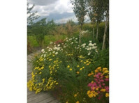 GardenWild Ltd (3) - Gardeners & Landscaping