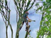 Akarb Tree Surgeons (2) - Gardeners & Landscaping
