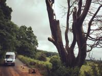 Akarb Tree Surgeons (4) - Gardeners & Landscaping