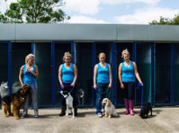 Jaycliffe Kennels & Cattery (3) - Pet services