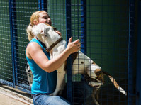 Jaycliffe Kennels & Cattery (4) - Pet services