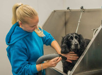 Jaycliffe Kennels & Cattery (5) - Pet services