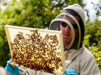 Buzzing Bee (1) - Ostokset