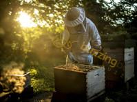 Buzzing Bee (2) - Ostokset