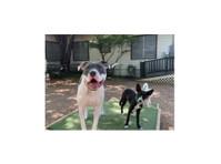 Canine Cowboy (1) - Pet services