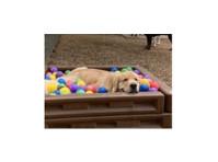 Canine Cowboy (2) - Pet services