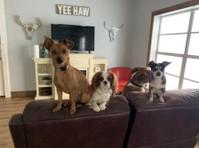 Canine Cowboy (3) - Pet services