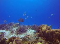 Koox Diving Cozumel (2) - Water Sports, Diving & Scuba