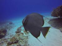 Koox Diving Cozumel (4) - Water Sports, Diving & Scuba