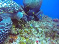 Koox Diving Cozumel (7) - Water Sports, Diving & Scuba