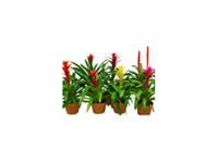 PDI PLants Inc (2) - Gardeners & Landscaping