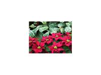 PDI PLants Inc (3) - Gardeners & Landscaping