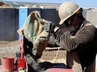 Elite Concrete Contractors Buffalo (1) - Construction Services
