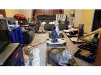 Focused Dog Training, LLC (1) - Pet services