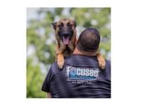 Focused Dog Training, LLC (2) - Pet services