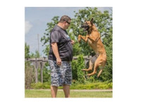 Focused Dog Training, LLC (3) - Pet services