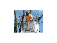American Tree, LLC. (3) - Gardeners & Landscaping