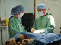 Maybeck Animal Hospital (2) - Hospitals & Clinics
